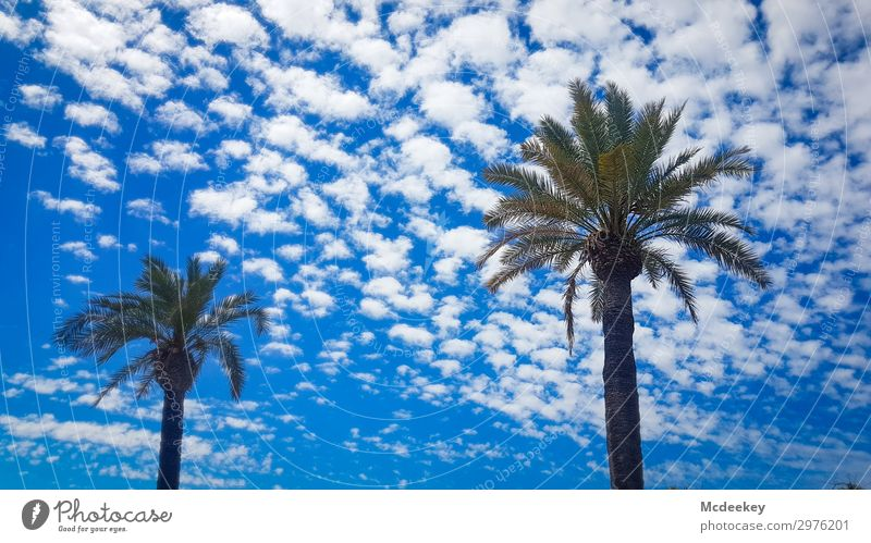Sky Nature Summer Plant Blue Town Green Landscape Clouds Black Warmth Environment Gray Park 2 Free