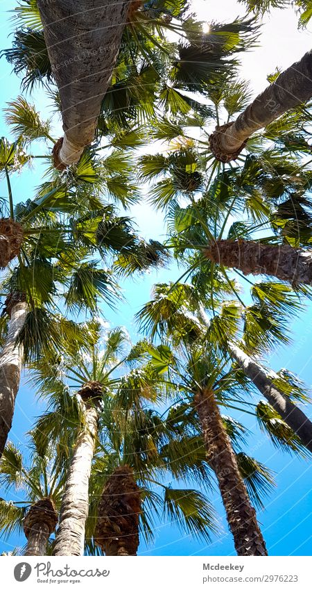 sea of palm trees Environment Nature Landscape Plant Sky Clouds Sun Sunlight Summer Beautiful weather Warmth Leaf Foliage plant Wild plant Exotic Palm tree Park