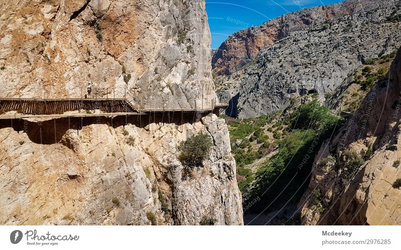 Caminito del Rey Environment Nature Landscape Sky Cloudless sky Summer Beautiful weather Warmth Drought Plant Tree Bushes Rock Canyon Andalucia Spain Europe
