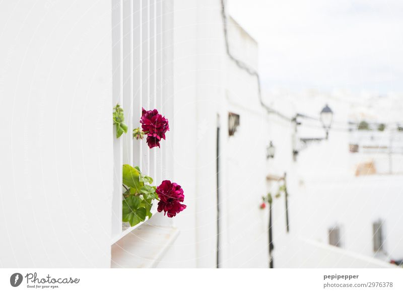 Vacation & Travel Plant White Red Flower House (Residential Structure) Leaf Window Wall (building) Blossom Tourism Wall (barrier) Stone Facade