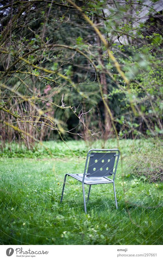 today on TV: Nature Environment Spring Plant Garden Park Natural Curiosity Green Botanical gardens Chair Colour photo Exterior shot Deserted Day Long shot