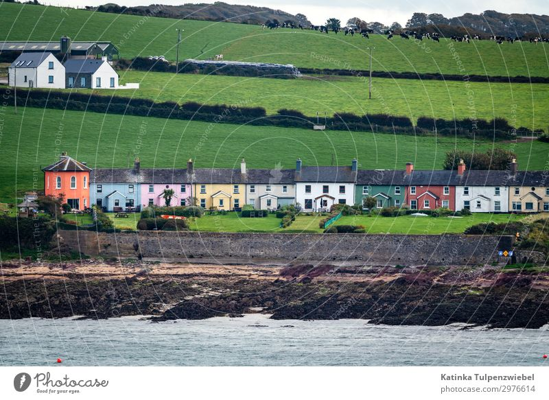 The spirit of Ireland Vacation & Travel Nature Summer Plant Colour Green Water Landscape Ocean House (Residential Structure) Animal Travel photography Street