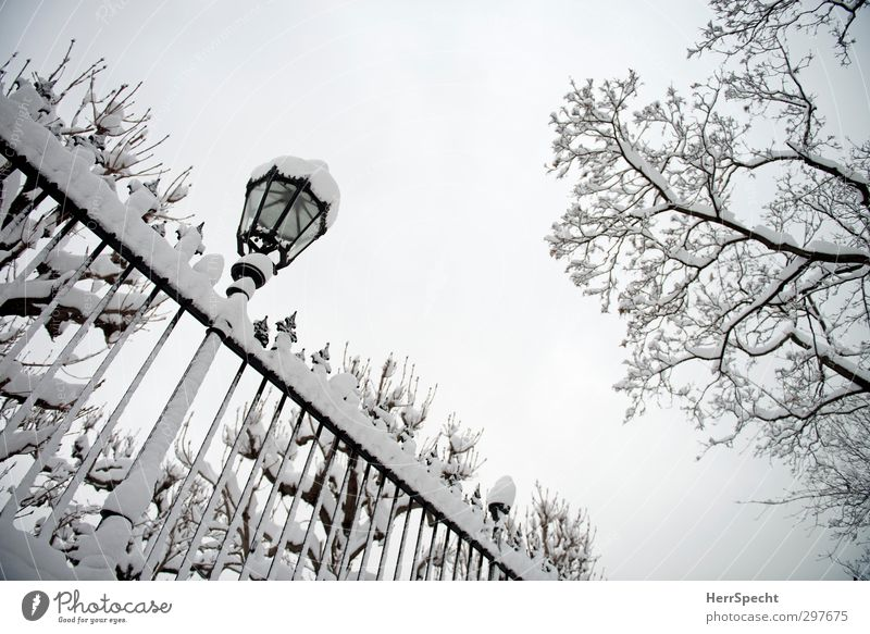 Nature White Tree Winter Black Cold Gray Snowfall Park Ice Esthetic Branch Frost Street lighting Fence Downtown