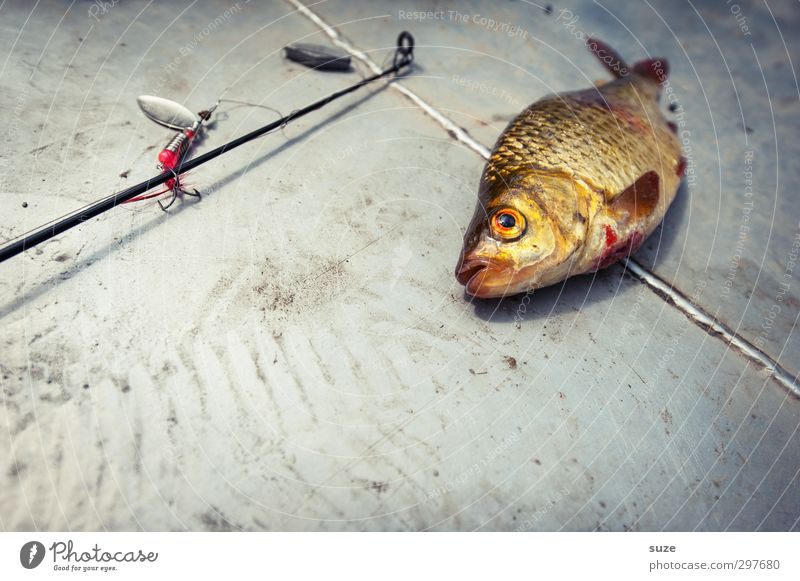 I put so much effort into it. Leisure and hobbies Fishing (Angle) Animal Wild animal Dead animal 1 Lie Authentic Gray Death Spoon bait Checkmark Fishing tackle