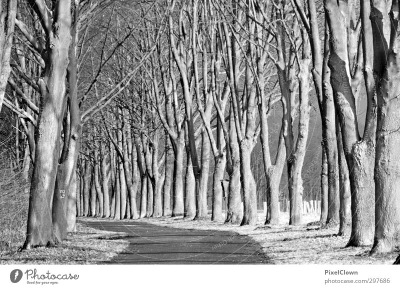 tree-lined avenue Landscape Tree Forest Village Emotions Nature Black & white photo Day Panorama (View)