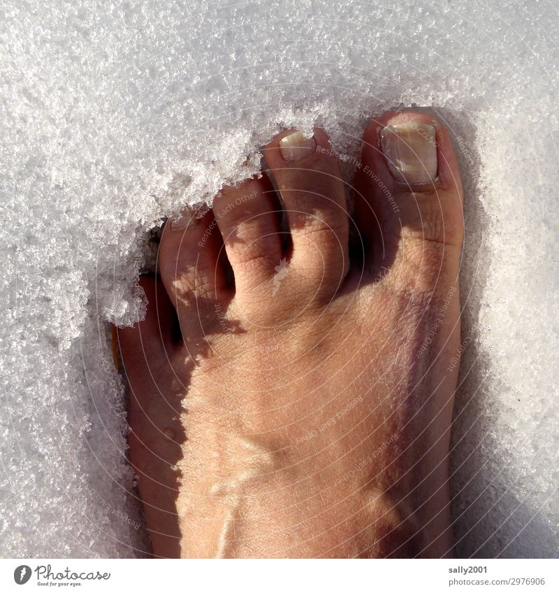 cool down... Human being Feet Toes Snow Stand Healthy Cold Naked Frost Cooling Freeze Relaxation Brave Unwavering Ice Colour photo Exterior shot Day