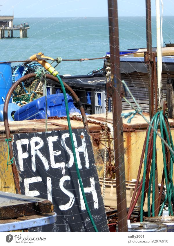 freshly caught... Fish Fishery Summer Coast North Sea Ocean Great Britain England Harbour Characters Signs and labeling Signage Warning sign Sell Offer Hose