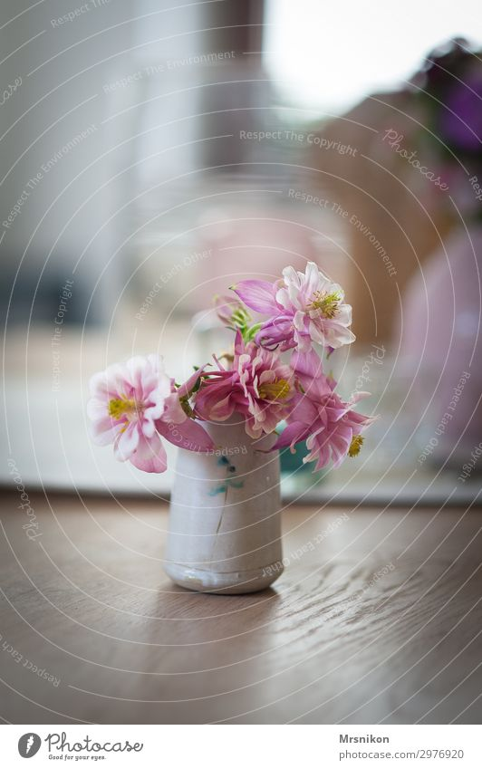 spring Plant Spring Summer Flower Beautiful Pink Aquilegia Vase Bouquet Delicate Pastel tone Blossom Flowering plant Style Furniture Table Colour photo