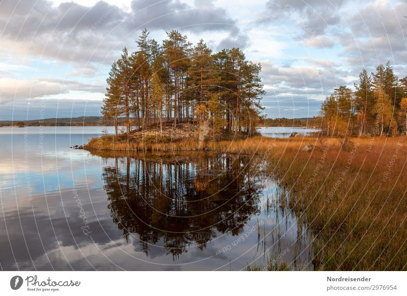 Lake Landscape in Sweden Vacation & Travel Tourism Adventure Freedom Camping Nature Elements Water Sky Clouds Sun Summer Autumn Beautiful weather Tree Forest
