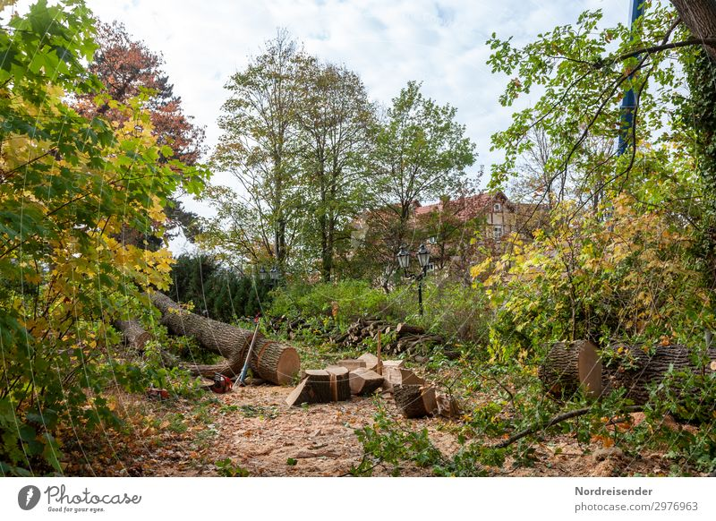 tree felling Work and employment Profession Gardening Workplace Agriculture Forestry Landscape Tree Park Village Small Town Deserted