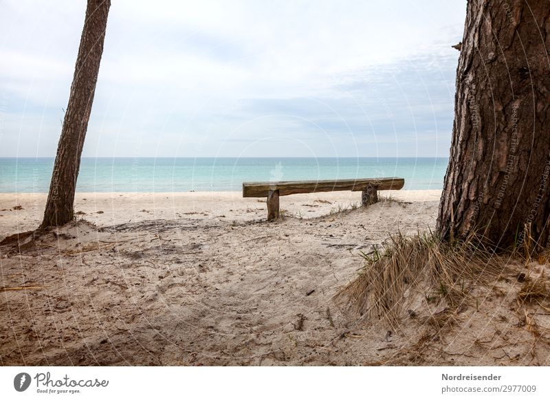 Idyllic place at the west beach Harmonious Calm Meditation Vacation & Travel Tourism Summer Beach Ocean Nature Landscape Water Tree Grass North Sea Baltic Sea