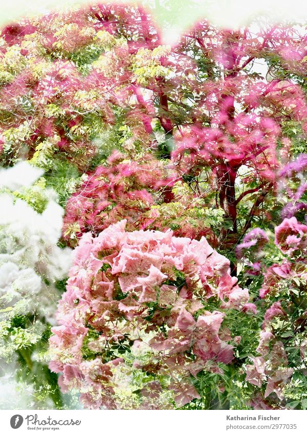 Double exposure nature Nature Plant Spring Summer Autumn Tree Flower Leaf Blossom Blossoming Wild Brown Yellow Green Pink Red White Colour photo Exterior shot