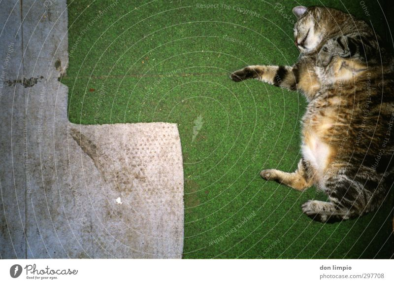...toil. Yoga Meadow Pet Cat 1 Animal To fall Flying Crawl Jump Fat Cuddly Near Gray Green Contentment Flexible Endurance Effort Resolve Relaxation Perspective