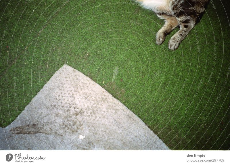 ..times more Pet Cat 1 Animal To fall Flying Lie Gray Green Surrealism Tiger skin pattern Legs Carpet Colour photo Interior shot Deserted Copy Space left