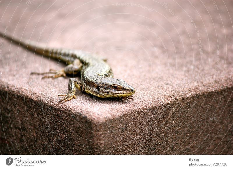 corners Animal Wild animal Lizards 1 Stone Observe Crouch Crawl Sharp-edged Cold Brown Green Colour photo Subdued colour Exterior shot Close-up Day