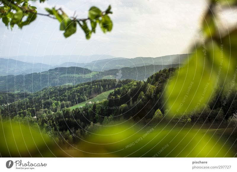 Green Mark II Environment Nature Landscape Horizon Summer Forest Hill Federal State of Styria Austria Colour photo Exterior shot Deserted Day Twilight Blur