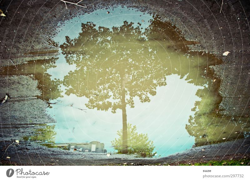 OMG: I am a tree Environment Nature Water Autumn Weather Tree Leaf Authentic Dirty Dark Wet Natural Blue Gray Autumnal Treetop Puddle Surface of water