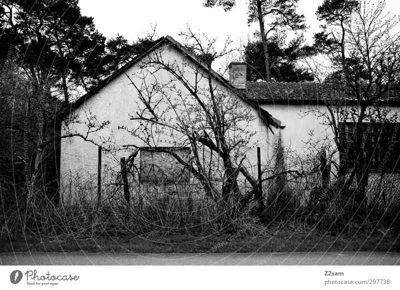 Old Tree Landscape Calm House (Residential Structure) Dark Dirty Growth Bushes Threat Transience Hut Creepy Decline Trashy Destruction