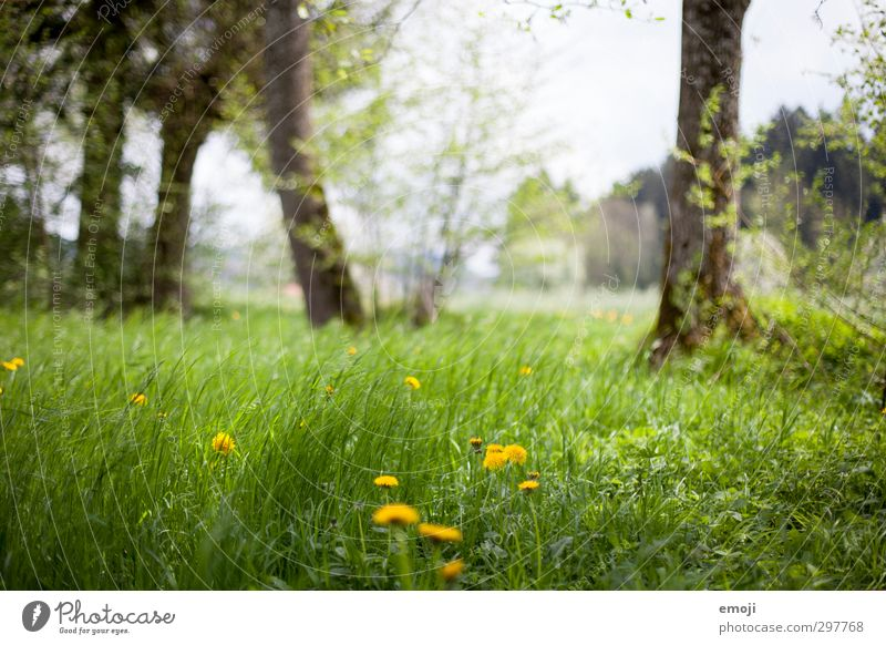 do you hear the wind? Environment Nature Landscape Spring Beautiful weather Wind Grass Meadow Natural Green Colour photo Exterior shot Deserted Day