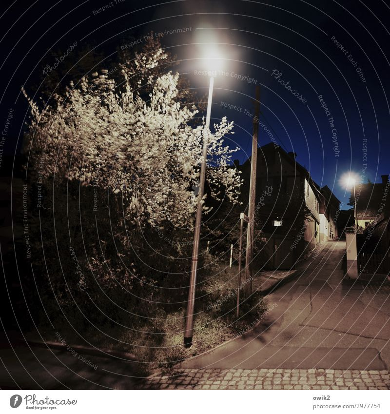 Narrow and steep Cloudless sky Night sky Tree Bushes Reudnitz Thuringia Germany Village Populated House (Residential Structure) Alley Street lighting Illuminate