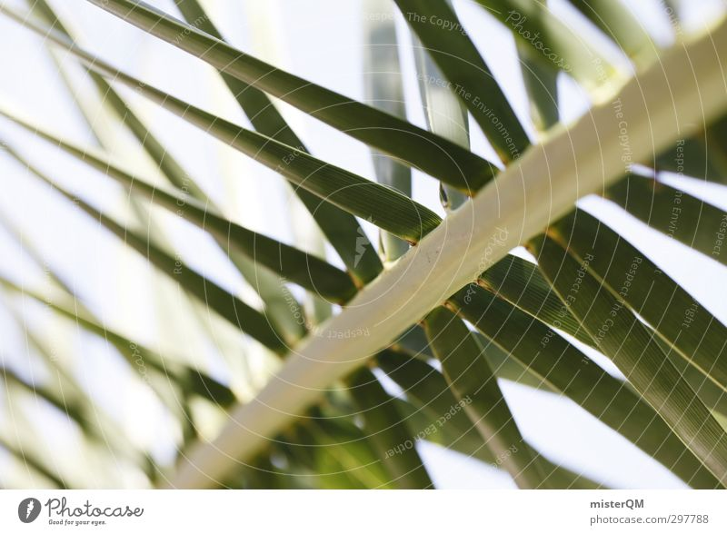 The palm tree. Art Esthetic Nature Palm tree Palm frond Palm roof Green Summer vacation Vacation & Travel Vacation photo Vacation destination Vacation mood
