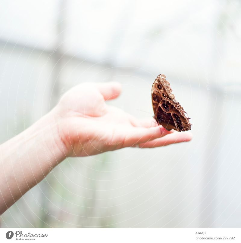 cautious Hand Animal Wild animal Butterfly Wing 1 Exceptional Brown Touch Colour photo Exterior shot Macro (Extreme close-up) Neutral Background Day