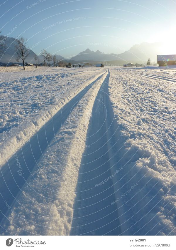 cross-country skiing paradise... Sports Winter sports Cross-country ski trail Landscape Cloudless sky Beautiful weather Snow Alps Cold Athletic White Tourism