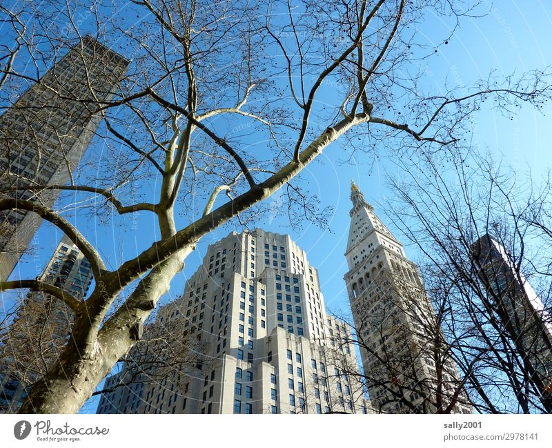skyscraper... Tree American Sycamore New York City USA Americas Town Downtown Skyline House (Residential Structure) High-rise Gigantic Tall Relationship