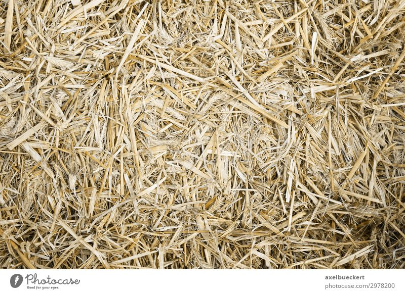 Straw Background Nature Natural Background picture Horizontal full-frame image Bird's-eye view Bale of straw Pressed Dried Eco-friendly Material Agriculture