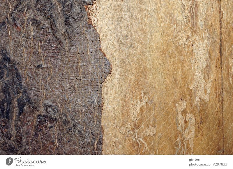 wood bark Nature Plant Tree Wood Simple Firm Bright Dry Brown Yellow Subdued colour Exterior shot Close-up Detail Macro (Extreme close-up) Pattern