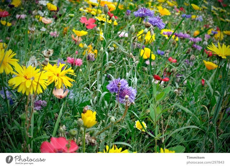 Love of detail, of course! Nature Plant Summer Flower Blossom Meadow Blossoming Growth Blue Yellow Green Pink White Mother's Day Flower meadow Multicoloured