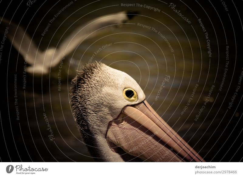A high-flyer, a gull flies over a pelican. All you can see is the head and the beak. Exotic Joy Harmonious Trip Summer Nature Beautiful weather Rock Ocean