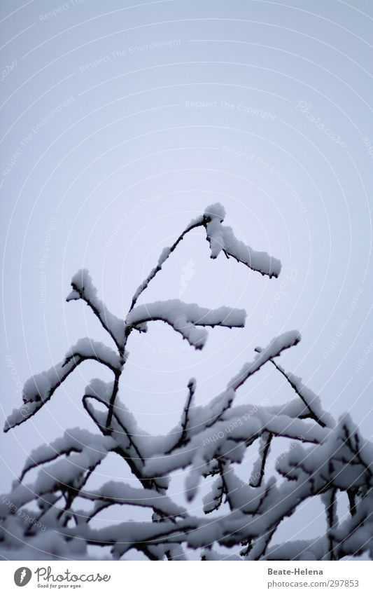 Attention to detail / Plant protection Beautiful Winter Snow Hiking Stage play Nature Sky Weather Tree Forest Coat Pelt Decoration Relaxation To hold on