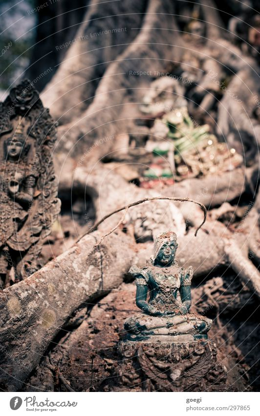 adorably Plant Tree Belief Religion and faith Buddhism Statue of Buddha Ganesh Colour photo Multicoloured Exterior shot Deserted Shallow depth of field