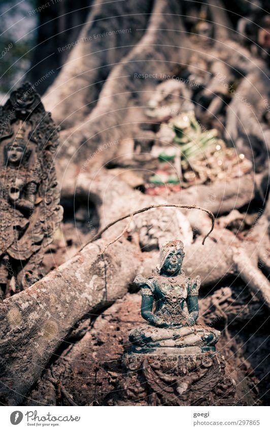 Plant Tree Religion and faith Belief Statue Buddha Buddhism Ganesh Statue of Buddha
