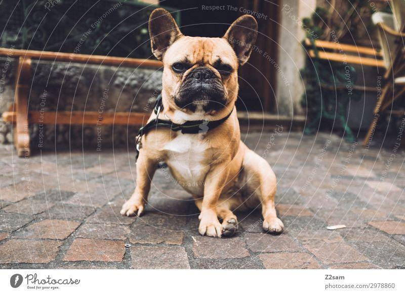 doormen Village Small Town Pedestrian precinct Pet Dog Observe Crouch Looking Cool (slang) Brash Rebellious Brown Bravery Self-confident Power Loyalty Identity