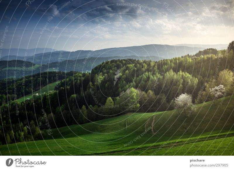 Sky Nature Beautiful Landscape Clouds Forest Environment Spring Freedom Horizon Beautiful weather Romance Hill Infinity Environmental protection Austria