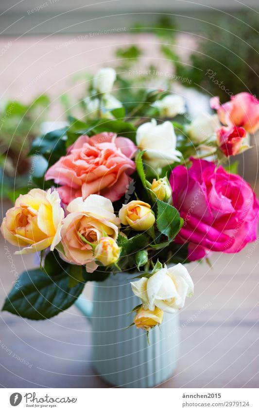 Nature Summer Plant Flower Yellow Love Spring Garden Pink Gift Rose Bouquet Vase Pick Water jug