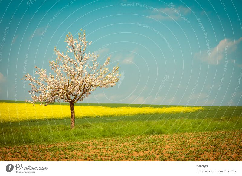 Sky Nature Blue Green Beautiful White Summer Tree Colour Landscape Yellow Warmth Spring Horizon Field Illuminate
