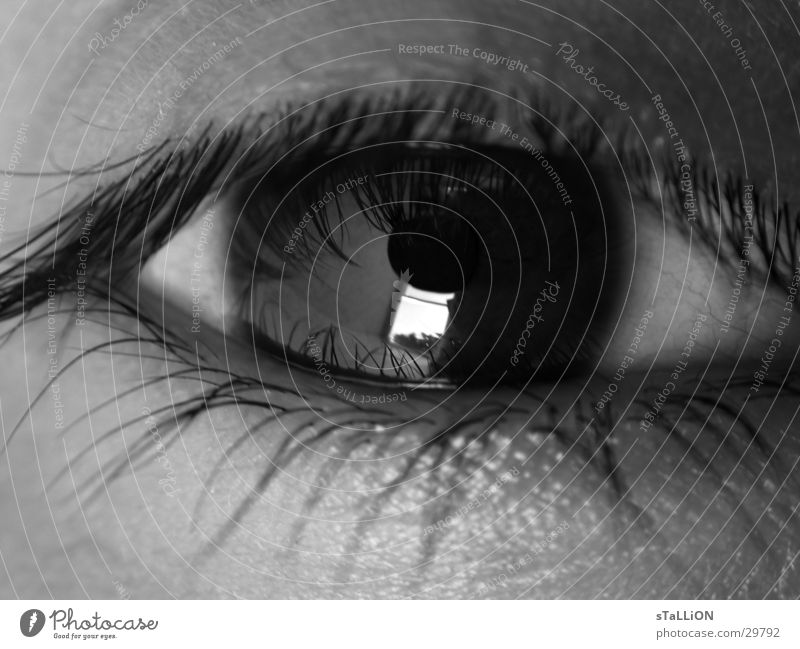 oeil Eyelash Woman Eyes Black & white photo Looking reflection dreariness