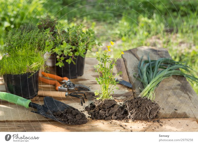 Seedlings, plants in pots and garden tools Pot Leisure and hobbies Summer Garden Table Work and employment Gardening Woman Adults Environment Nature Plant Earth