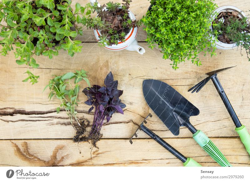 Seedlings, plants in pots - gardening concept Woman Nature Summer Plant Green Flower Adults Wood Environment Natural Garden Work and employment