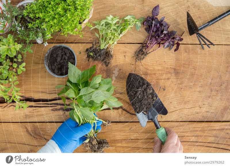 Seedlings, plants in pots and garden tools Woman Nature Summer Plant Green Flower Adults Wood Environment Natural Garden Work and employment Leisure and hobbies