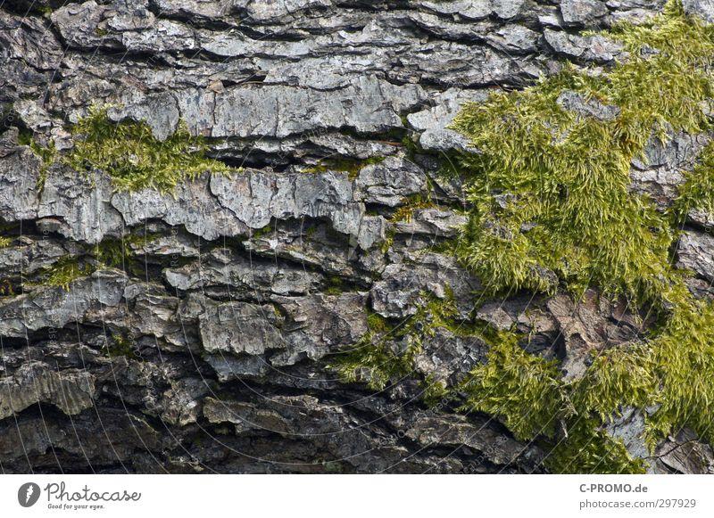 The bark is the best Tree Moss Senior citizen Tree bark Rough Green Colour photo Exterior shot