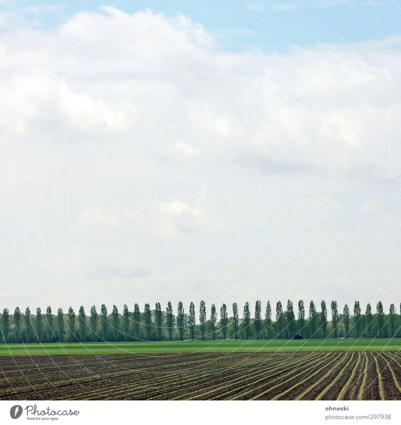 In rank and file Agriculture Forestry Landscape Sky Spring Tree Field Green Arrangement Environment Colour photo Exterior shot Pattern Deserted Copy Space left