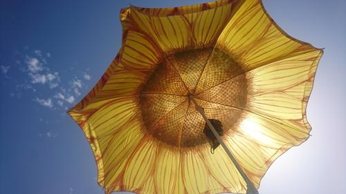 Sunflower parasol Summer vacation Vacation mood Sky Hot Sunshade recover Vacation & Travel Sunlight Beautiful weather Panorama (Format)