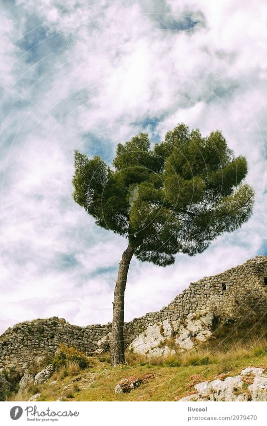 lonely tree in the citadel of Berat Sky Vacation & Travel Nature Plant Blue Beautiful Green White Landscape Tree Relaxation Clouds Loneliness Leaf Calm Joy