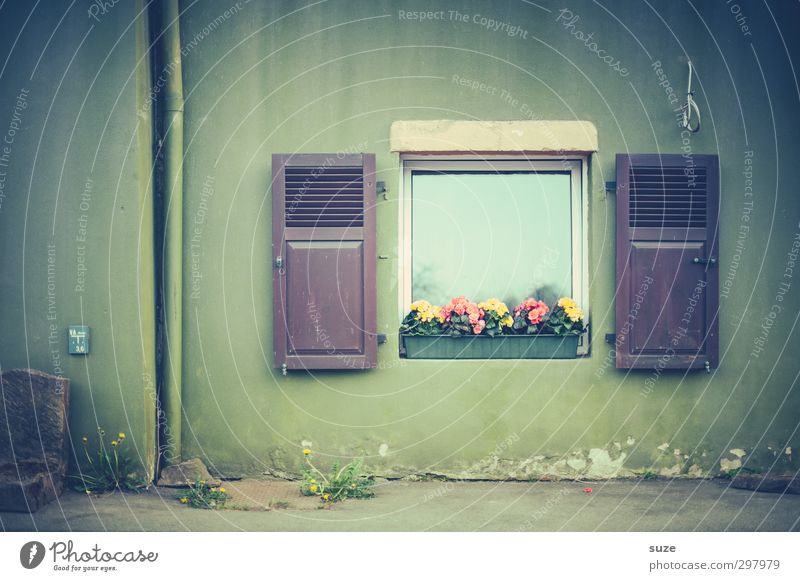 window picture Living or residing Decoration Flower Wall (barrier) Wall (building) Facade Window Wood Authentic Simple Gloomy Green Shutter Country life Rural