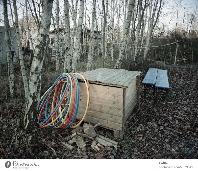 hula hoop Tree Birch tree Hula hoop Crate Shed Wood Together Gloomy Multicoloured Loneliness Uninhabited Forget Bench Colour photo Subdued colour Exterior shot