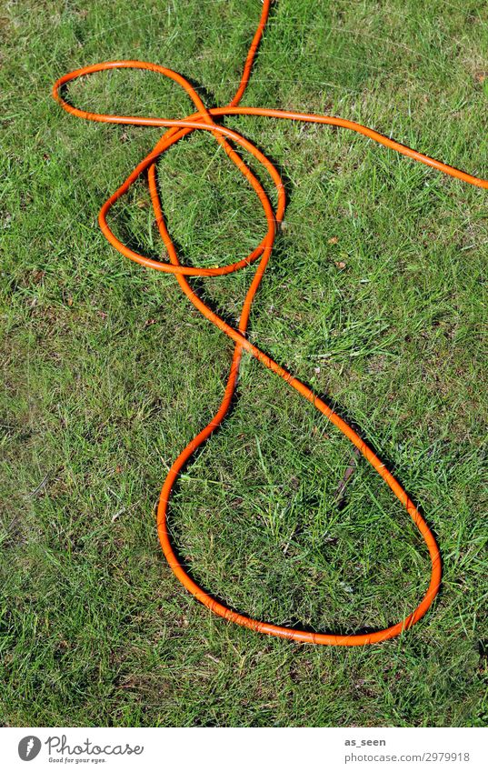 garden hose Garden Environment Nature Landscape Plant Earth Summer Climate Climate change Beautiful weather Drought Grass Lawn Garden hose Knot Lie Authentic